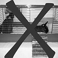 Download broschüre das kaninchensichere zuhause