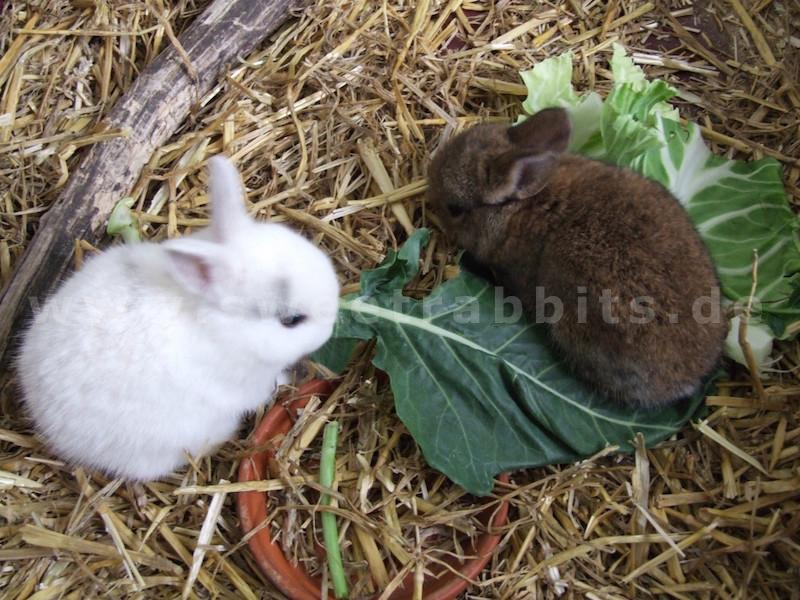 nachwuchs und aufzucht bei kaninchen. Black Bedroom Furniture Sets. Home Design Ideas