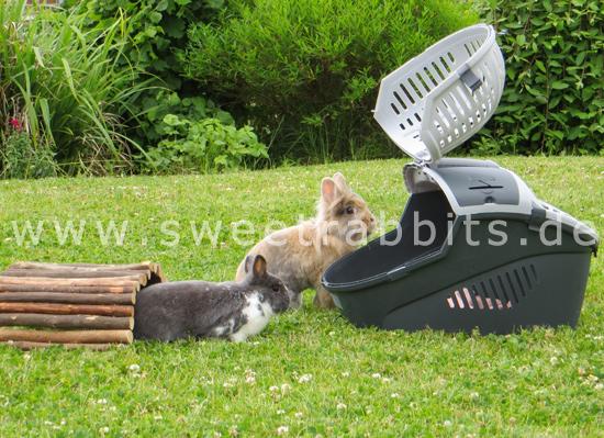 nobby 81059 transportbox f r kleine hunde und katzen nager elmo large 36 x 28 x 22 cm bunte. Black Bedroom Furniture Sets. Home Design Ideas