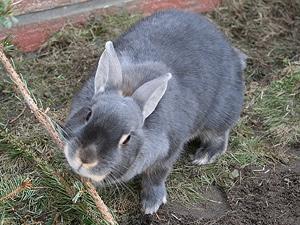 welchen geruch mögen kaninchen nicht