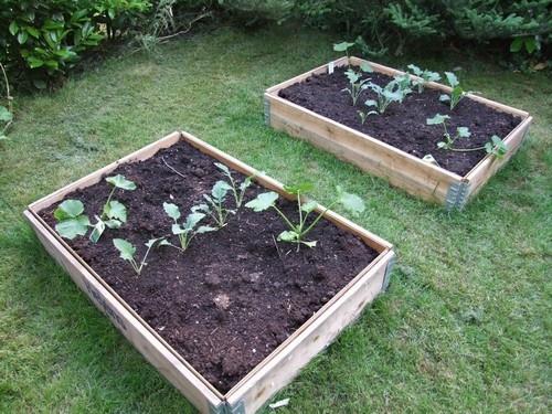 balkon, garten, terrasse - zeigt her was ihr so anpflanzt, Gartengestaltung