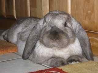 unterschied kaninchen hase